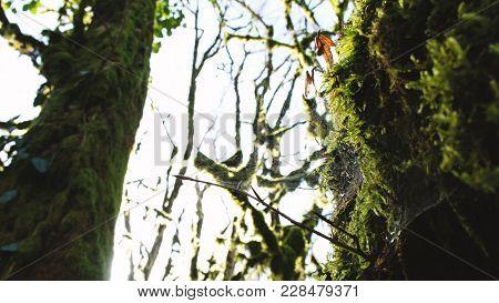 A Large Web On A Mossy Tree, 4k.