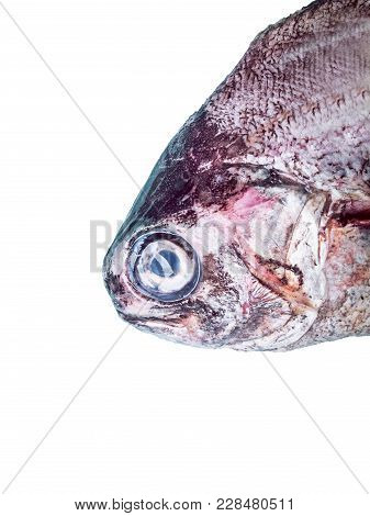 Conceptual Photo Of The Head Of A Bream
