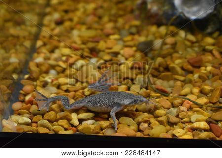 African Dwarf Frog In My Fish Tank