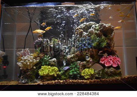 Fish Tank In My Dorm Room