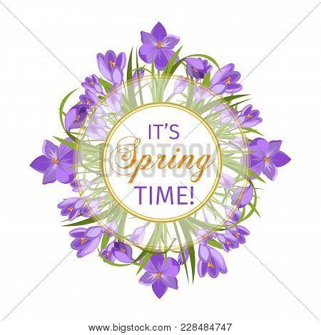 Crocus Flowers Spring Floral Beautiful Violet Flowering Illustration Vector Nature Purple April Plan