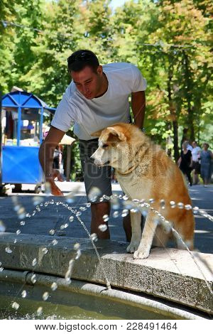 Thirsty Akita Inu In Frront Of  Public Fountain