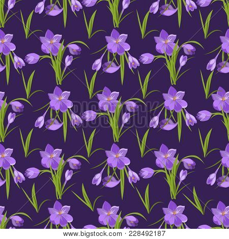 Crocus Flowers Spring Pattern Background Beautiful Violet Flowering Illustration Vector Nature Purpl