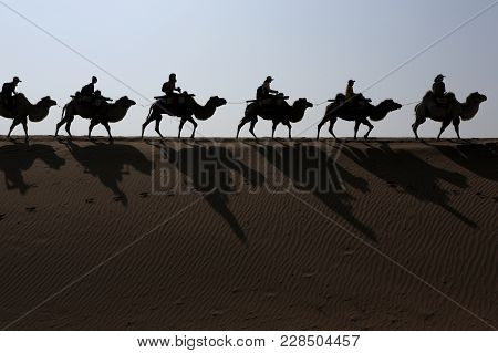 Camel Riding In The Shapotou District Of Tengger Desert