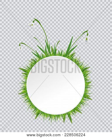 Spring Banner With Snowdrop And Grass Border Around. Vector Illustration On White Background.