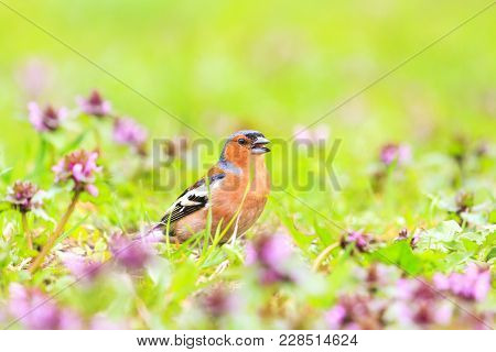 Spring Story Bird Sings In Thickets Of Flowers, Wildlife, Spring