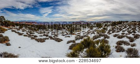 Desert In Arizona With Rare Desert Plants Covered With Clean White Snow Under Beautiful Clouds. Cany