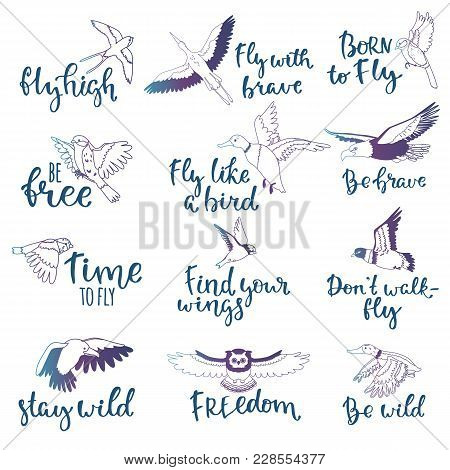 Bird Lettering Vector Text Fly High And Flying Birdie Swallow With Feather Wings Illustration Set Of