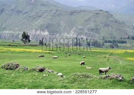 Landscape In The Colca Canyon, Arequipa Region , Peru