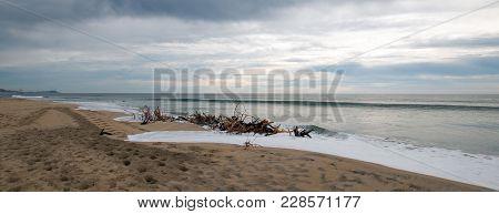 Driftwood Beach Bramble In San Jose Del Cabo In Baja California Mexico Bcs