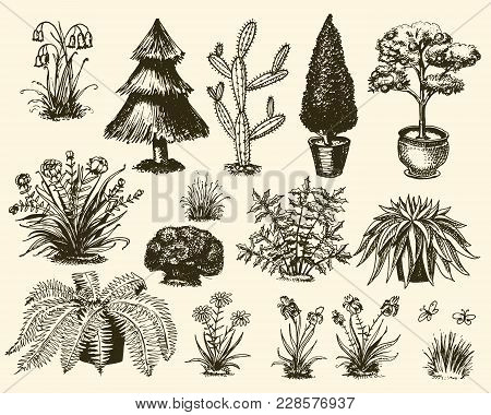 Garden Plants Vector Gardening And Planting With Decorative Tree Or Flowers Planted Outdoors Illustr