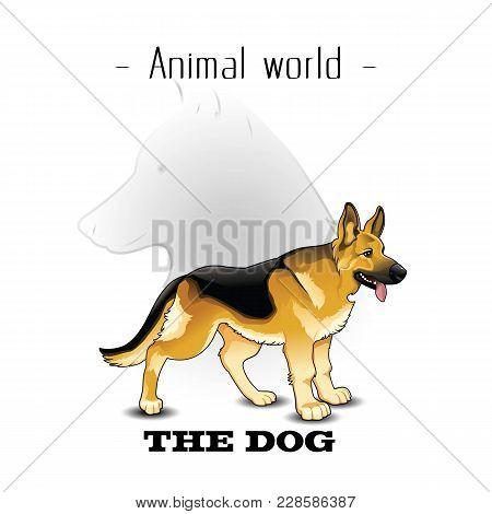 Animal World The Dog German Shepherd Background Vector Image