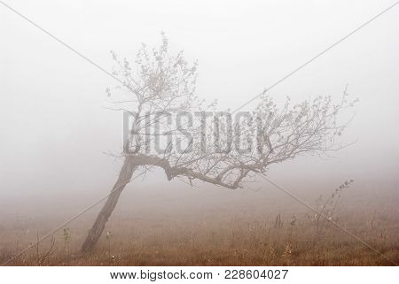 Lonely Birch In A Thick Fog In Crimean Mountains.