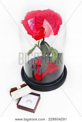 Red Rose And A Ring In A Box. Rose In A Flask. Long-lasting Rose In A Flask, In A Glass Dome, Stabil