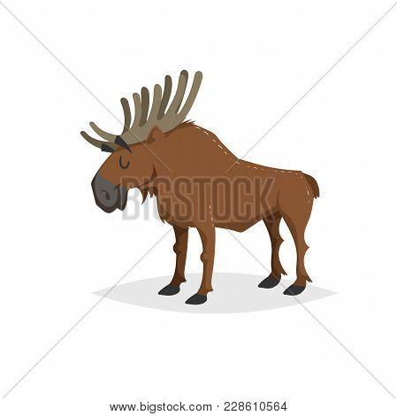 Cartoon Cheerful Standing Moose. Forest Europe And North America Animal. Flat With Simple Gradients