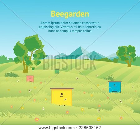 Cartoon Beekeeping Apiary Farm Garden Landscape Background With Beehive And Bee Flat Design Nature Scene Card Poster Vector Illustration Of Beegarden