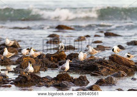 White Birds On Rocks At Myponga Beach In South Australia Australia On The 16th February 2018