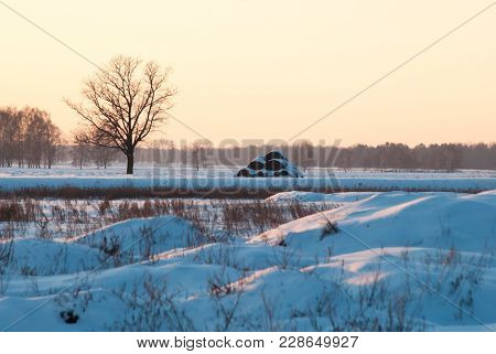 Winter Evening Landscape, Lonely Tree And Snowdrifts, Twilight