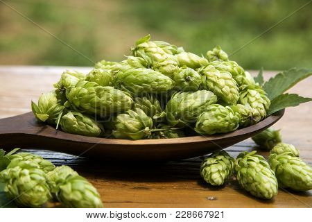 Hops Cones In Wooden Ladle Bowl With Plantation Background