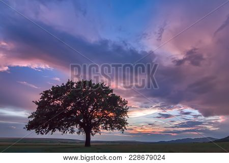 Beautiful Landscape With A Lonely Oak Tree In A Field, The Setting Sun Shining Through Branches And