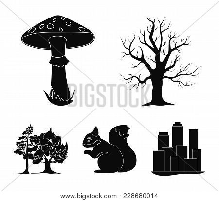 Dry Tree, Protein, Poisonous Fungus, Wildfire.forest Set Collection Icons In Black Style Vector Symb