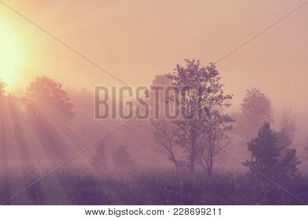 Misty Spring Morning Landscape On Bright Sunrise With Vivid Sunbeams Through Trees On Meadow. Wild S