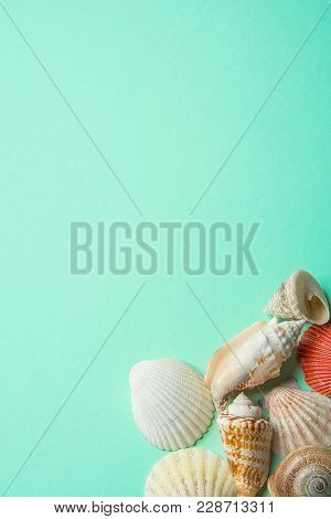 Sea Shells Of Different Shapes Flat Round Spiral On Turquoise Background. Minimalist Modern Styled S