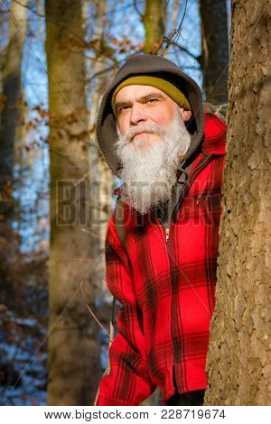 An image of a gray bearded lumberjack in the woods