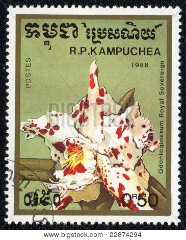 Odontoglossum Royal Sovereign