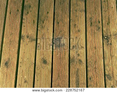 The surface of the hardwood floor treated with a fungicidal and insecticidal sealer. Places with lichen, the core wood not affected. poster