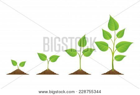 Planting. Plants Grow Isolated On White Background Or Plant Seed, Growing And Cultivation Vector Ill