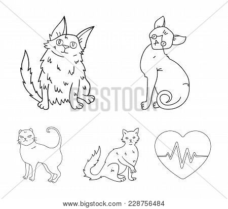 Turkish Angora, British Longhair And Other Species. Cat Breeds Set Collection Icons In Outline Style