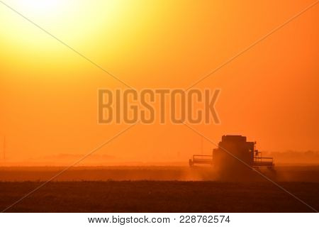 Harvesting By Combines At Sunset. Agricultural Machinery In Operation.