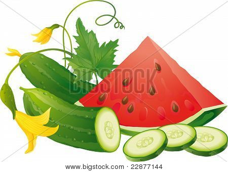 Watermelon And Coucumber
