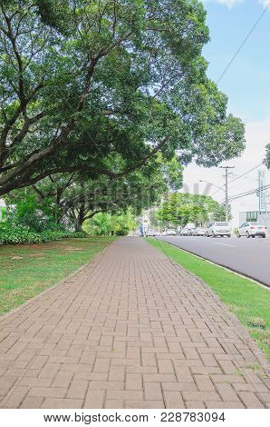 Sidewalk On Afonso Pena Avenue With Large Trees Around And The Street With Cars On The Other Side. M