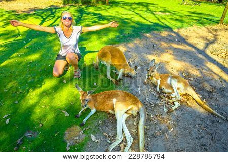 Happy Caucasian Woman With Open Arms Near Three Kangaroos At A Park In Whiteman, Near Perth, Western