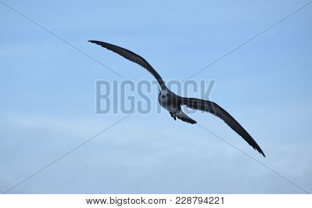 Picture Of A Sea Eagle Planned At Sky
