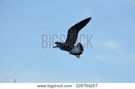 Picture Of A Sea Eagle In Miami Port