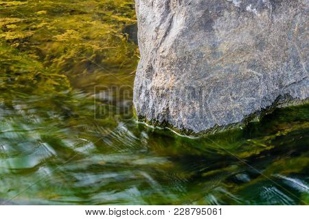 Closeup Of Green River Water Flowing Around A Large Gray Boulder With Green Seaweed Visible Under Su