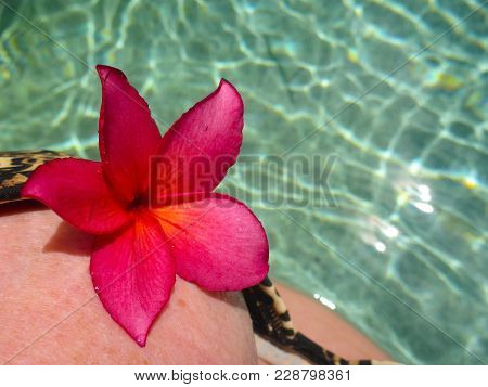 A Dark Pink Frangipani Flower On A Womens Bikini Top In A Lovely Sparkling Pool