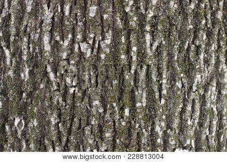 Simple Coarse Wooden Texture Of Tree Bark