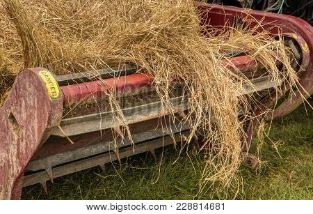 Round Bale Of Hay Getting Feed Out On A Bale Feeder.