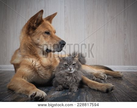 A Huge Dog And A Small Cat. Friendship Dogs And Cats