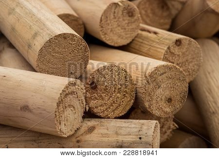 Nice Cut Round Fire Logs, Cut Form Pine Trees