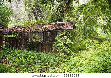 Ruin of a small hut covereed by encroaching jungle poster
