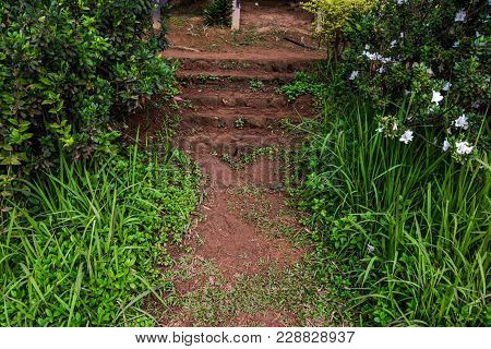 Staircase In The Garden With Grass And White Flower In Side Way, Thailand Gardening