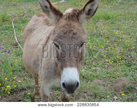 A Donkey Of Face, It Is A Portrait. He Has Eyes Wide Open, And A Beautiful Grey Color. He Is Alone A