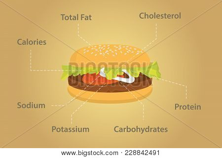 Hamburger Nutrition Fact Details With Flat Style Vector Graphic Illustrations