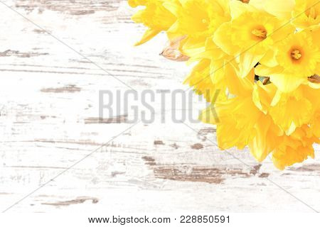 Bunch Of Yellow Jonquils On Bright Rustic Wooden Background