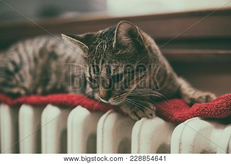 Beautiful Cat Lying Down On Radiator By The Window.